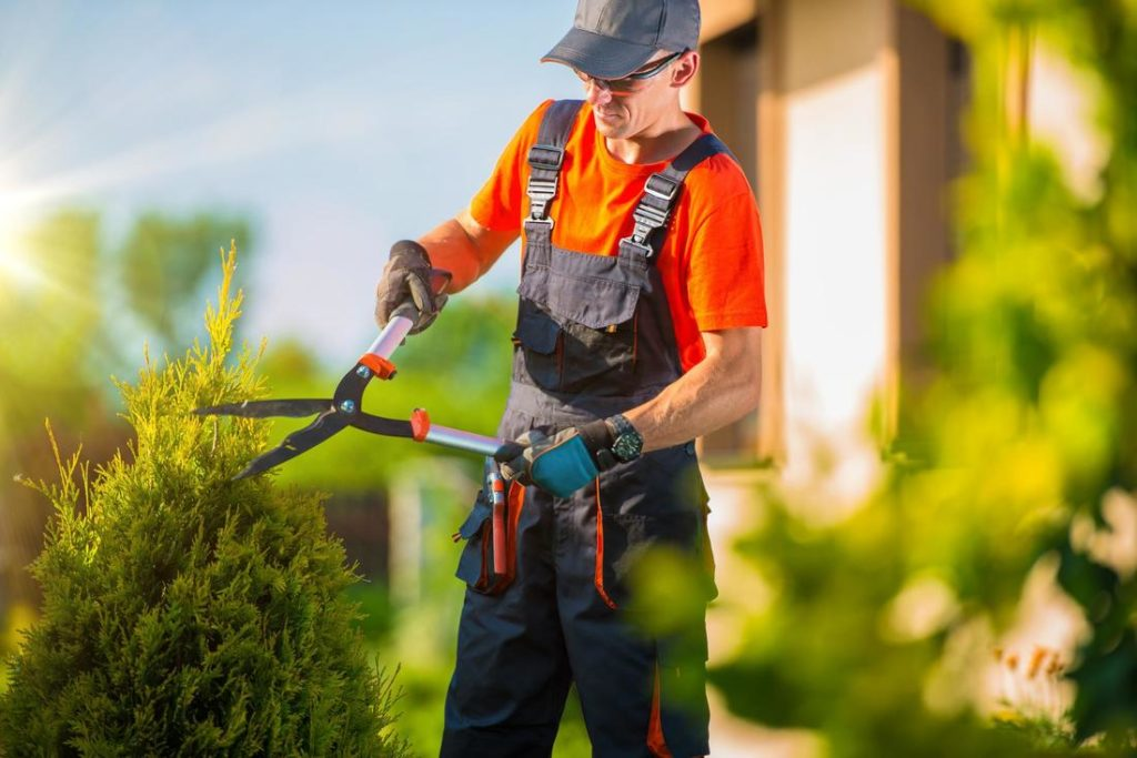 man trimming shrub